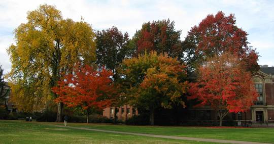 Fall color on the Oregon State campus